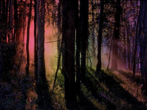 Ein Zauberwald