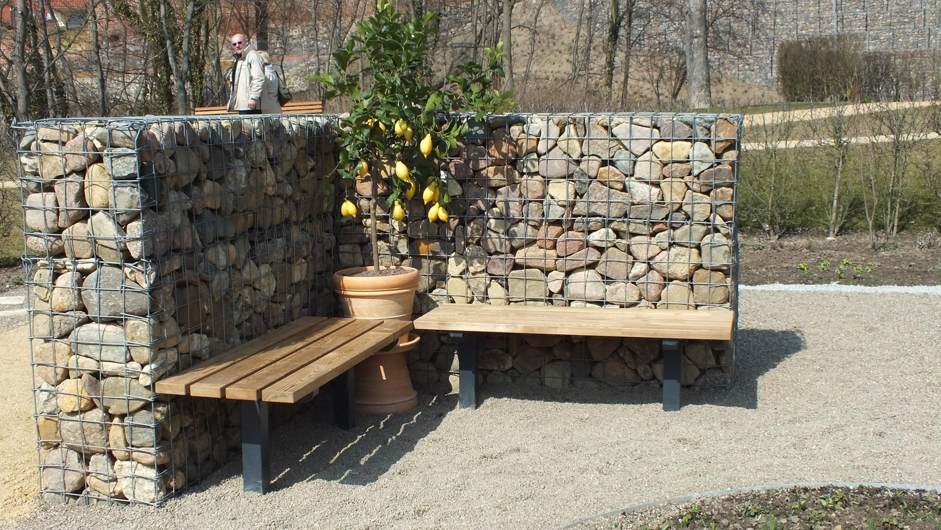 ein zitronenbaum in nord deutschland foto bild pflanzen pilze flechten b ume obstb ume. Black Bedroom Furniture Sets. Home Design Ideas