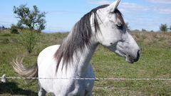 Ein zutrauliches Pferd in Frankreich
