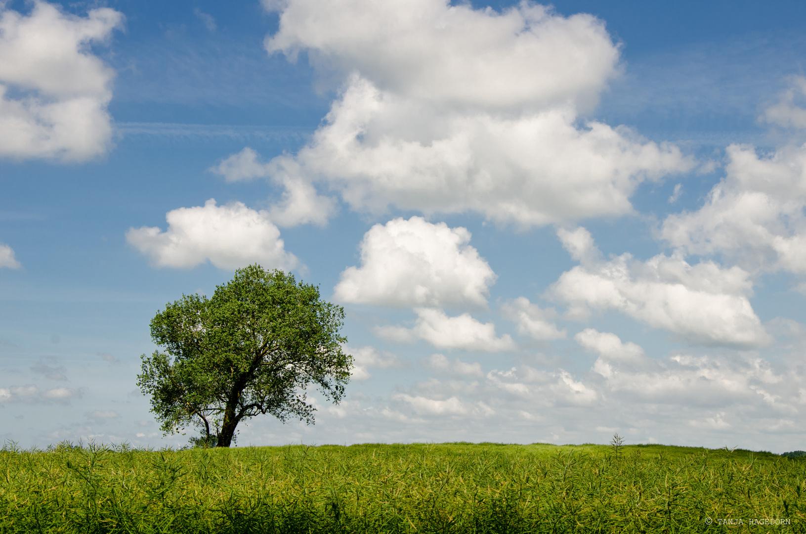 - Einbaum -