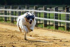 einbeiniger Blindenhund