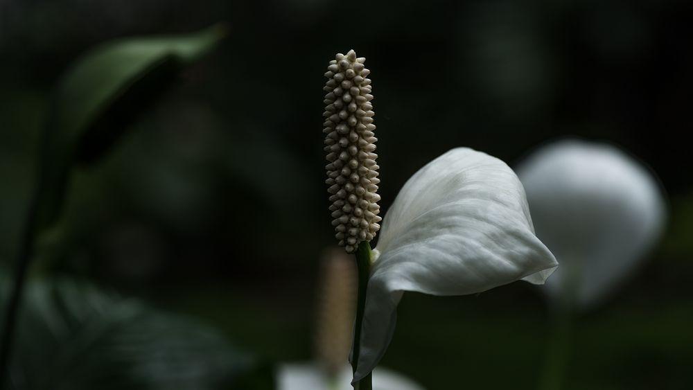 Einblatt