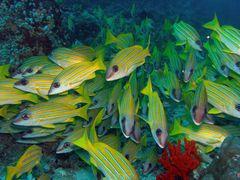 Einblick in die Unterwasserwelt der Malediven