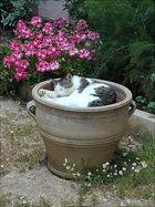 Ein(Blumen)topf mit Katze drin :-)