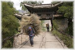 Einbringen der Rapsernte in China - nahe Lijiang am Yangtse