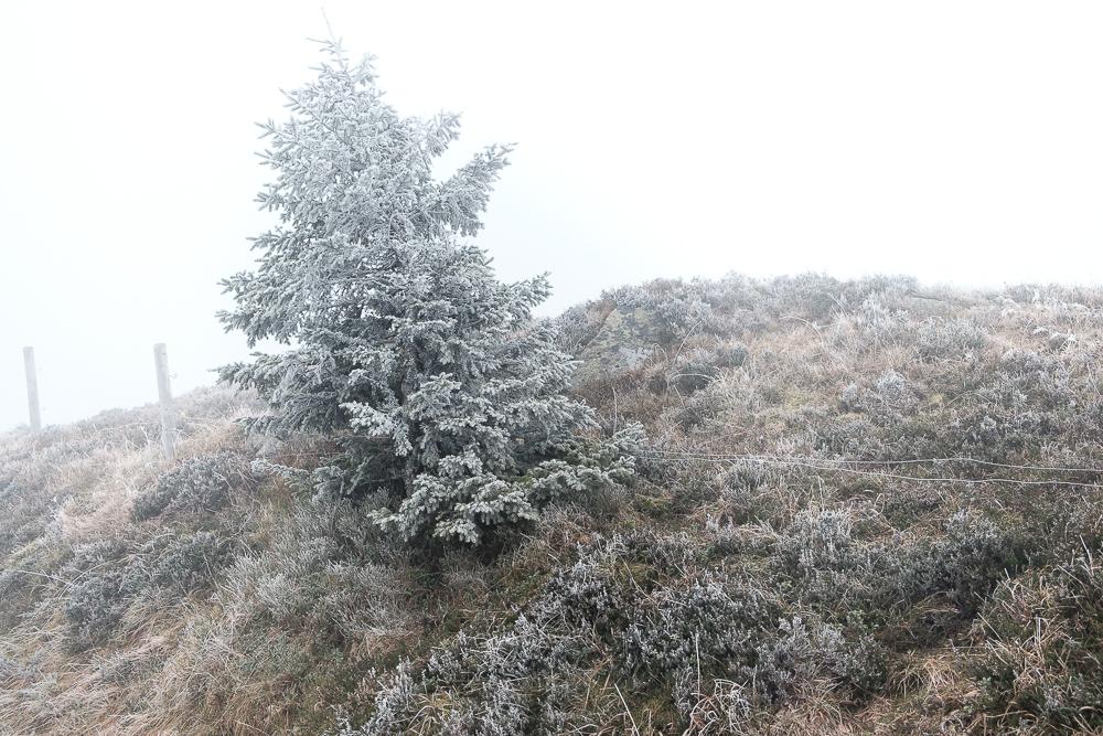 eine Ahnung von Winter