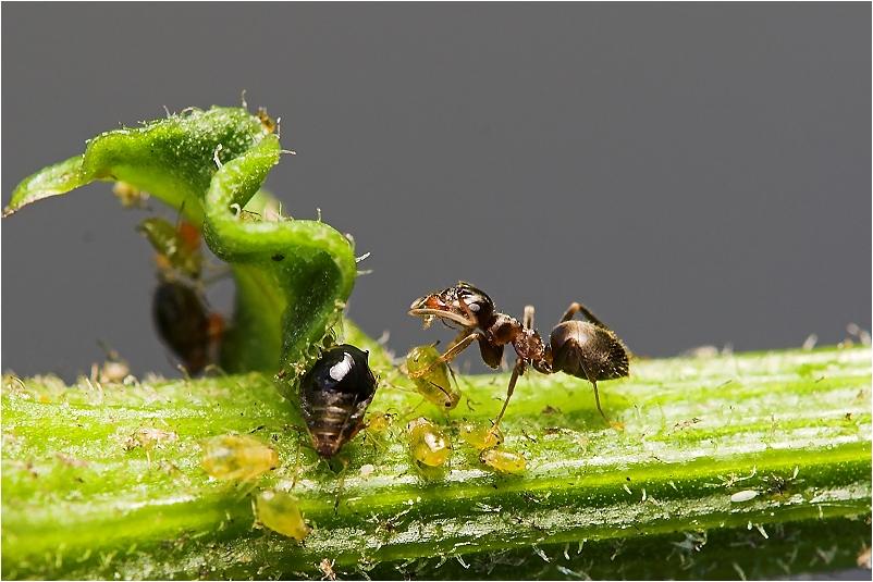 Eine Ameise....