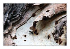 Eine Ameise auf dem Holzweg