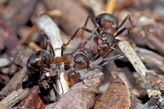 Eine Ameise schenkt der anderen etwas Feines! - Un cadeau pour une amie...