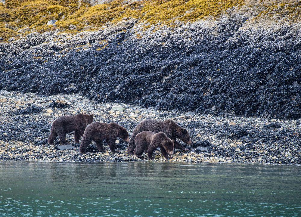 Eine Bärenfamilie II   DSC_0654