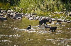Eine Bärenfamilie in British Columbia