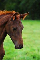 Eine Bild von Pferd