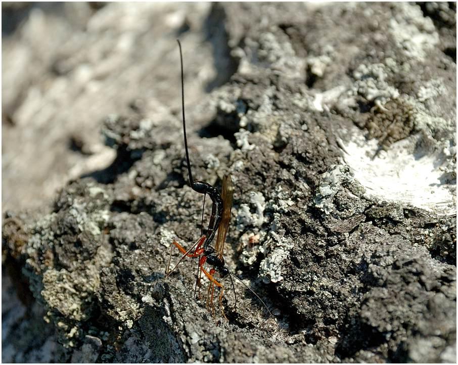 Eine Birke und die Wespe