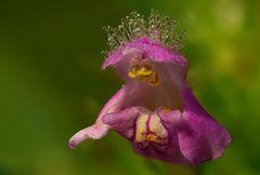 Eine Blüte am Wegrand