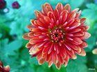 Eine Blüte, die der rauhen Kälte und dem scharfen Wind trotzt...