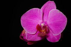 Eine Blüte für Euch