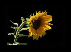 Eine Blume ...