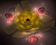 Eine Blume aus Apophysien hab ich euch mitgebracht......