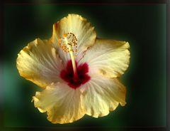 Eine Blume braucht Sonne…