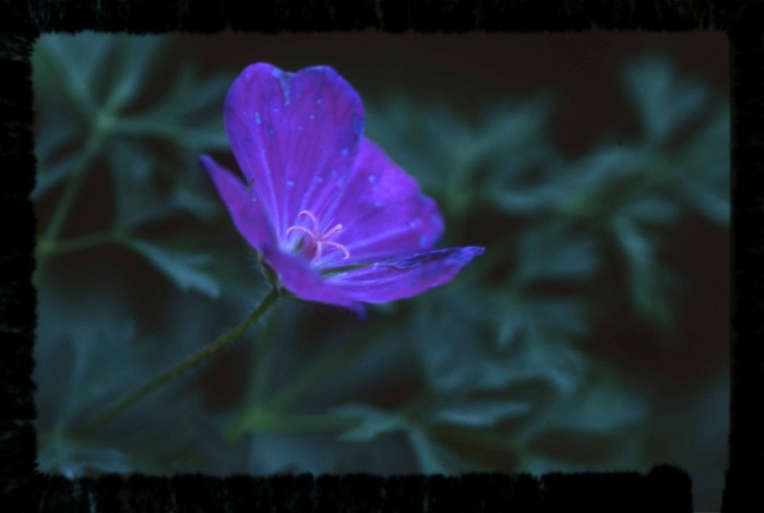 Eine Blume