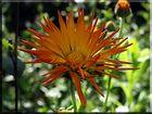 Eine Blume :-)