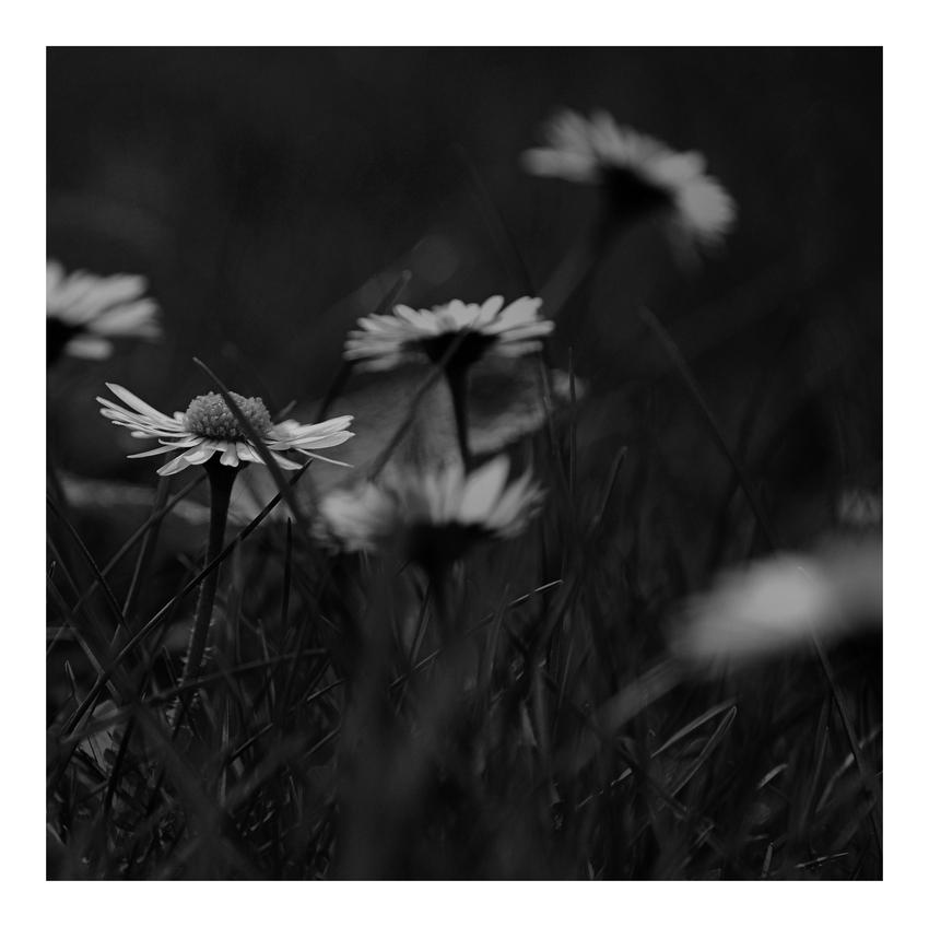 Eine Blume fotografieren...