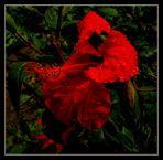 Eine Blume für Tim