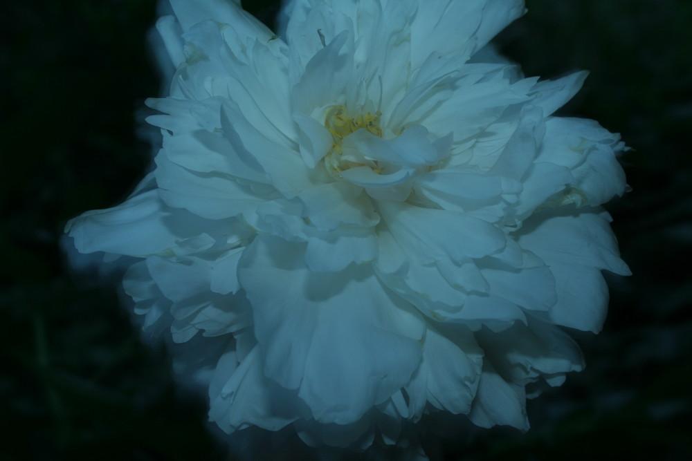 Eine Blume in der nacht