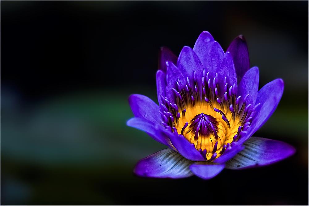 Eine Blume zum Muttertag