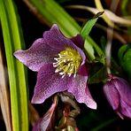 Eine Blume zum Sonntag