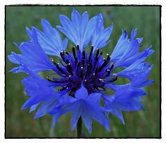 eine Blume zum ...such Dir was aus...