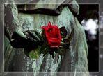 Eine blutrote Rose