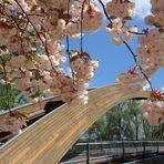 Eine Brücke zum Sommer....