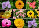 Eine Collage von besonderen Blumen !