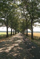 Eine der schönen Alleen in Brandenburg