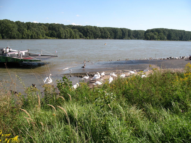 Eine der schönsten Fähren am Rhein