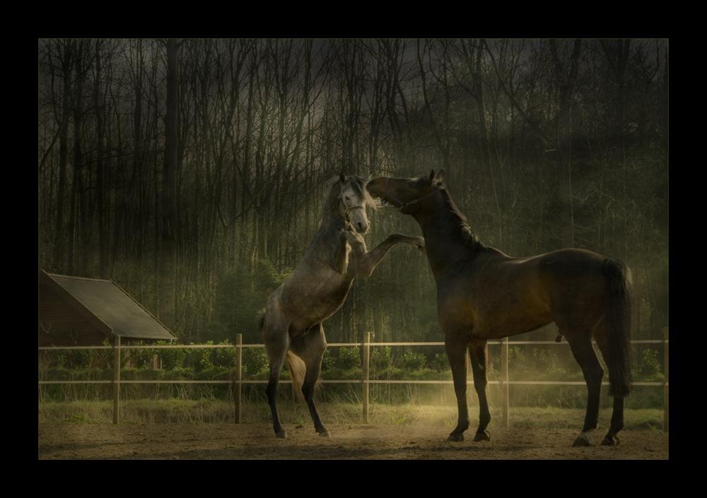 eine der schönsten Pferderassen der Welt…
