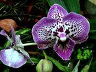 Eine der vielen schönen Orchideen . . .