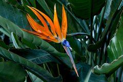 Eine echte Schönheit. Gesehen im Palmengarten Ffm