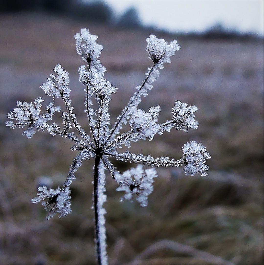 Eine Eisblume