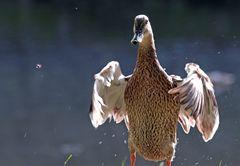 Eine Ente ... :-)