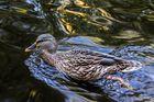 Eine Ente gibt Vollgas