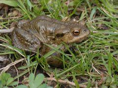 Amphibien&Reptilien