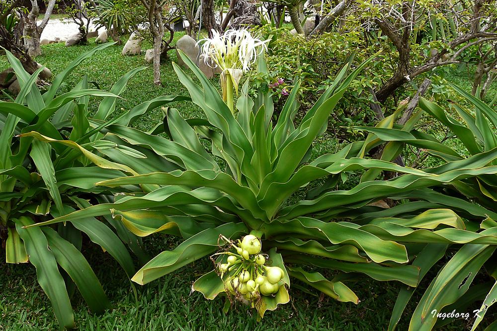 eine exotische pflanze mit bl ten und fr chten foto bild pflanzen pilze flechten. Black Bedroom Furniture Sets. Home Design Ideas