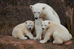 Eine Familie zum Knuddeln :-)