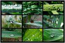 Eine Farbe-Grün - Tropfen Collage von MAY-HDR