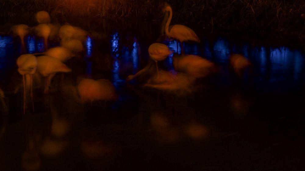 Eine Flamingonacht