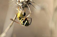 Eine Fliege zum Frühstück