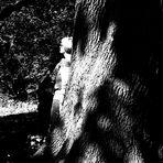 eine Freundschaft mit Bäumen  2