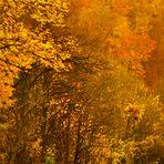 eine Freundschaft mit dem Herbst 2